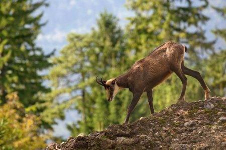 Животные Тебердинского заповедника